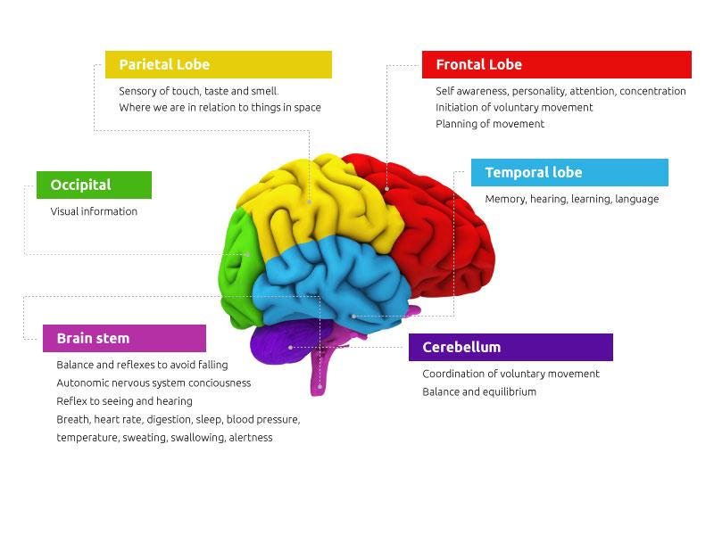 brain-2